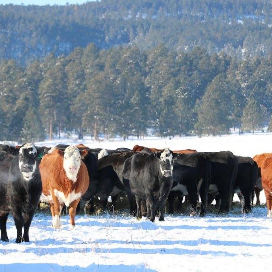 Snyder Ranch Photo
