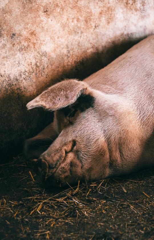 Froelich Farms LLC Photo